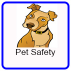 Safety around Pets